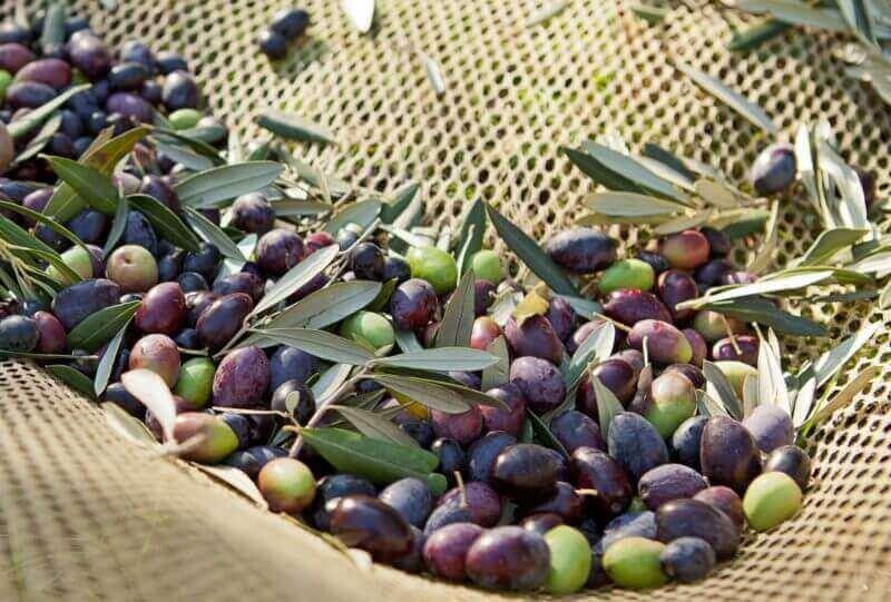 olives pressées à froid