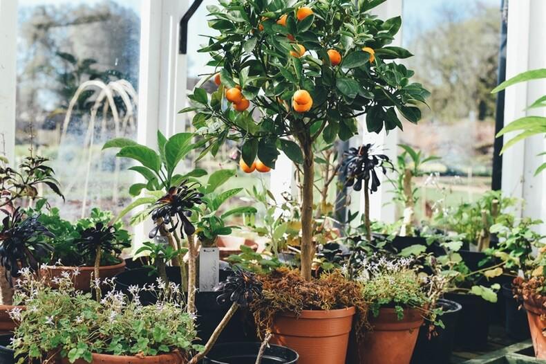 soin des plantes et de la maison grâce au savon noir